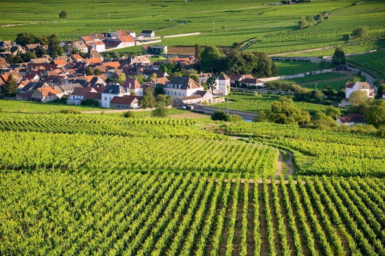 Burgundy 101: What's in a Grand Cru?