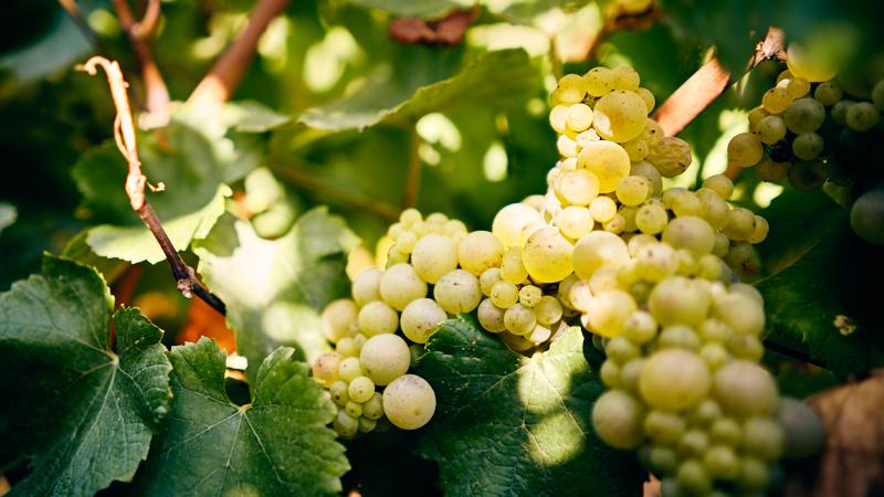 Burgundy 101 Saturday Tasting Series: White Burgundy - Chardonnay at Its Best