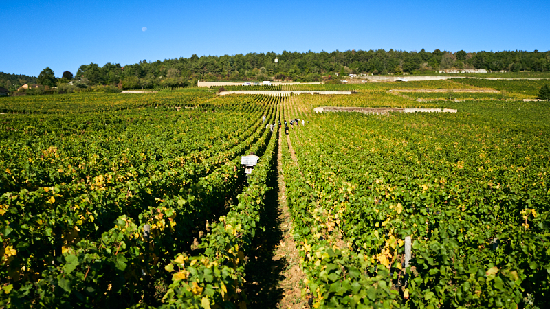 Burgundy 101 Saturday Tasting Series: Get to know the Charm of 1er Cru Chambolle-Musigny
