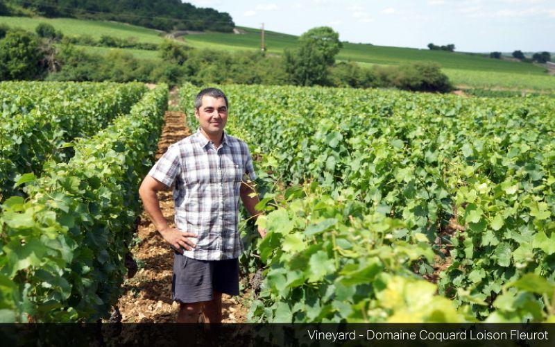 Domaine François Carillon and Domaine Coquard-Loison-Fleurot Winemaker Tasting on Thursday, 25 January 2018
