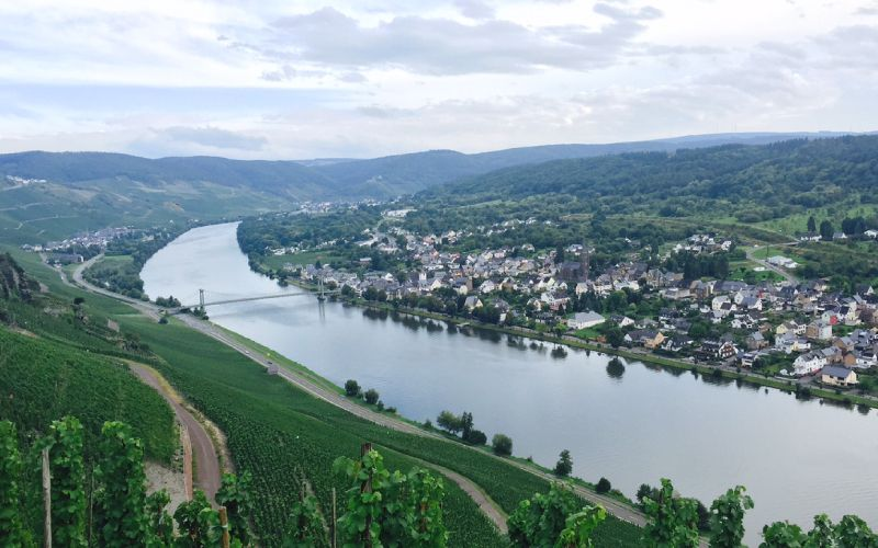 Tutored Mosel Riesling lunch, 10th Feb: 2016s from Carl von Schubert and Joh. Jos. Prüm